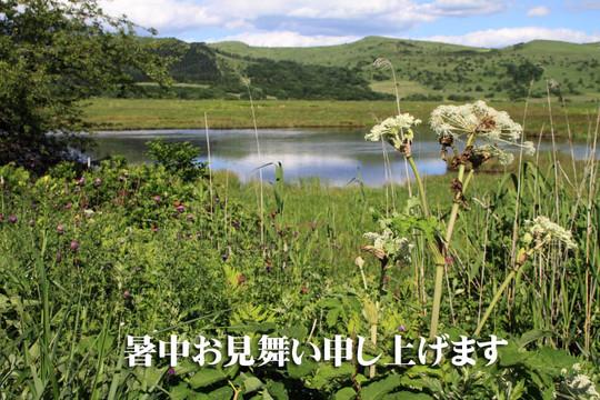 Shotyuuomimai