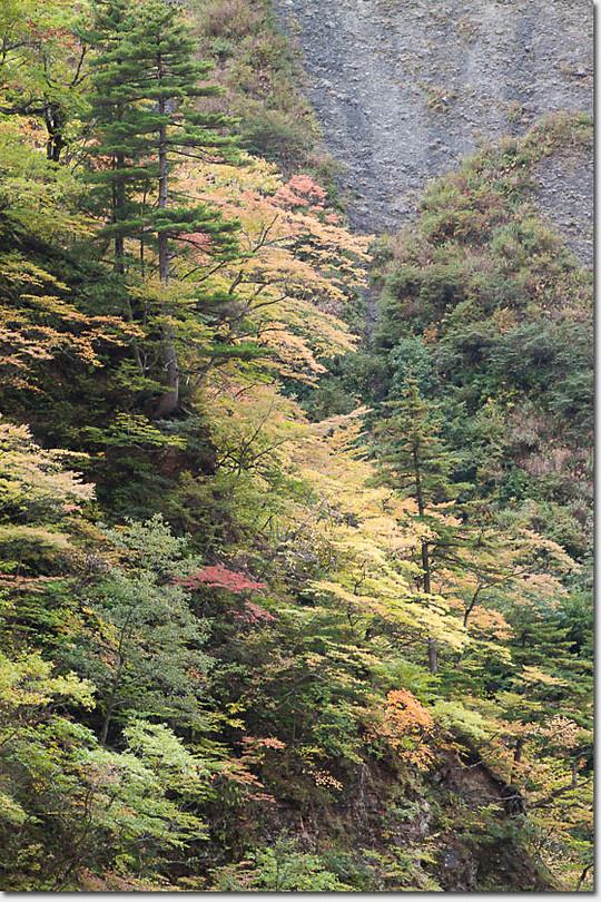 Kouyou_412_20141015