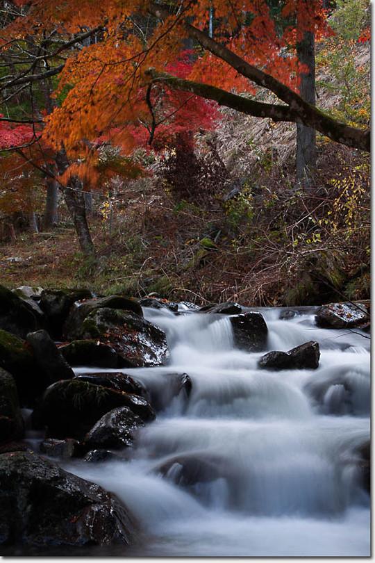Kouyou2_877_20141103