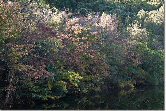 Nagaoike_1664_20141122