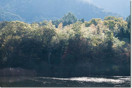 Nagaoike_1678_20141122