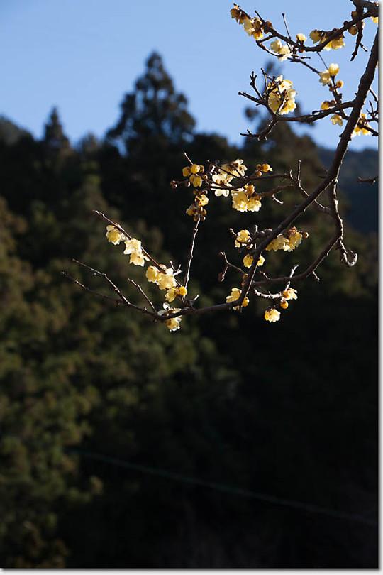 Sosinroubai_2782_20150202