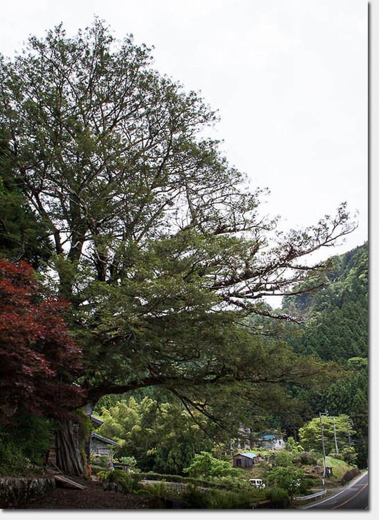 Sekkoku_5197_20150610