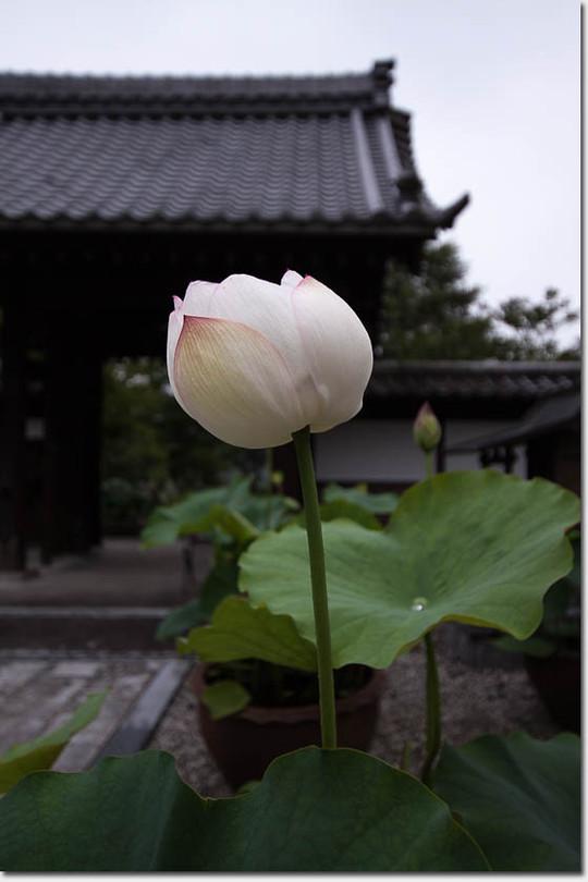 Hasu_5582_20150710